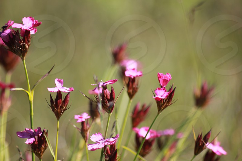 Detailed view of pink flowers photo