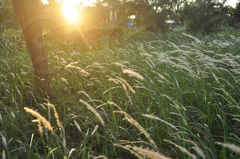 light sunset grass Batam Indonesia community photo