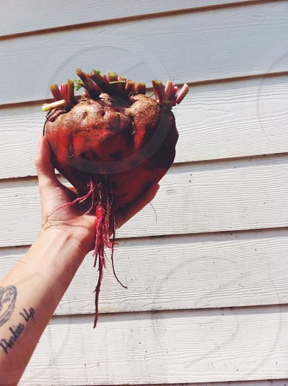 beet garden grow root red tattoo white  photo