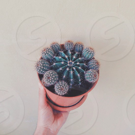 person holding plant pot with green cactus photo