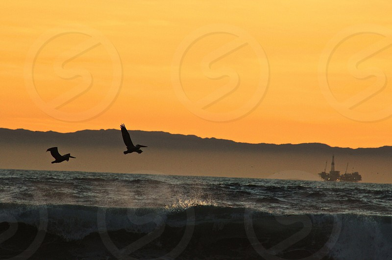 silhouette of birds flying above blue ocean under yellow sunset photo