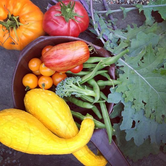 Fresh harvest from the veggie garden photo