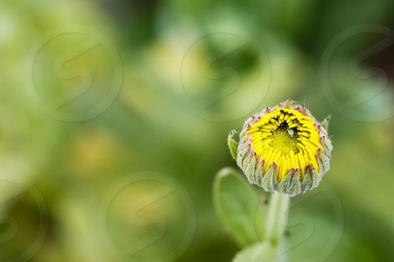 Beautiful flower bud photo