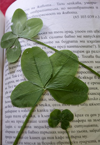 Green clover on the book photo