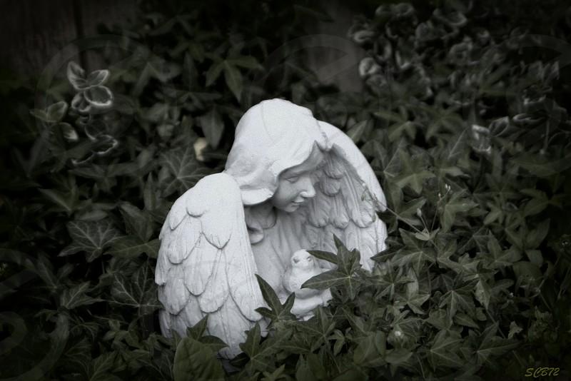 Garden Angel photo