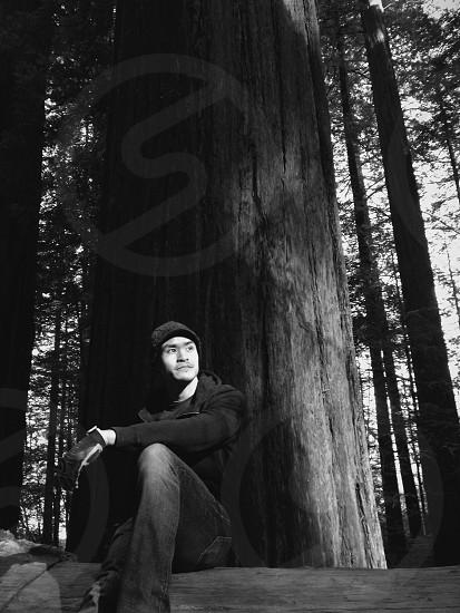 large sequoia tree photo