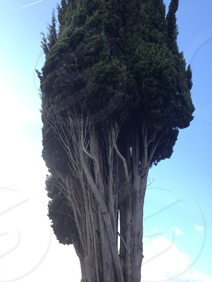 The monster tree photo
