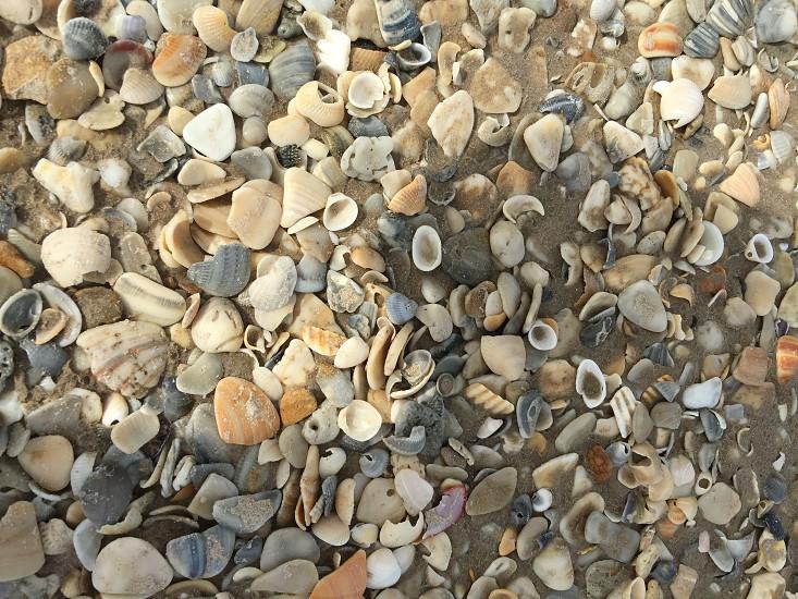Seashells Padre Island National Seashore  photo