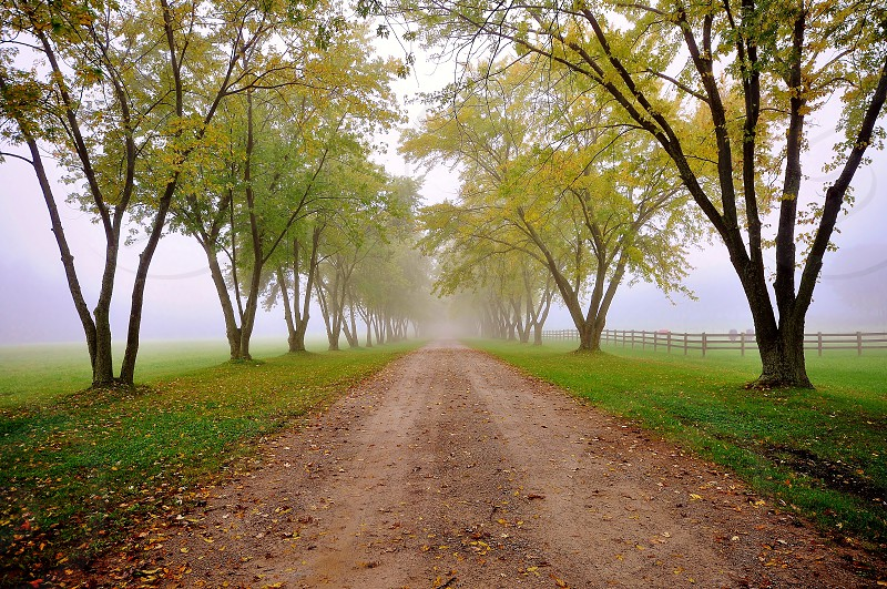 tree lined misty drive photo