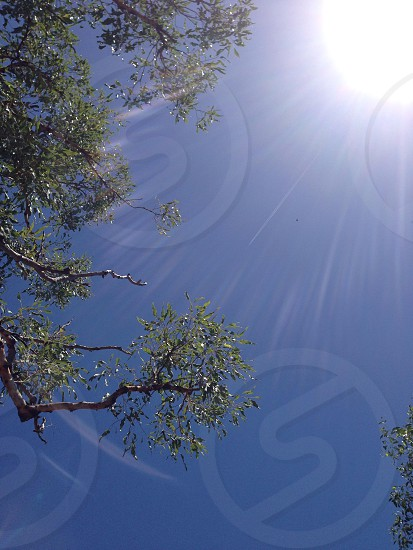Sun Tree Beams Light Flare Sky Glory photo