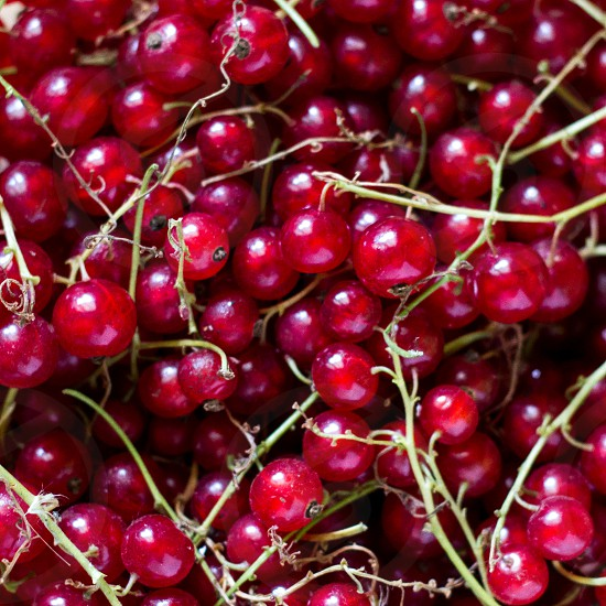 Red currant close-up photo