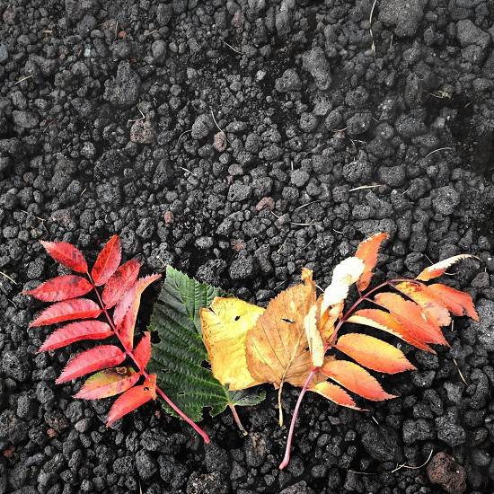 colored leaves photo