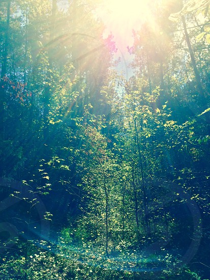 The Beauty Of Earths Sunlight Upon Nature photo