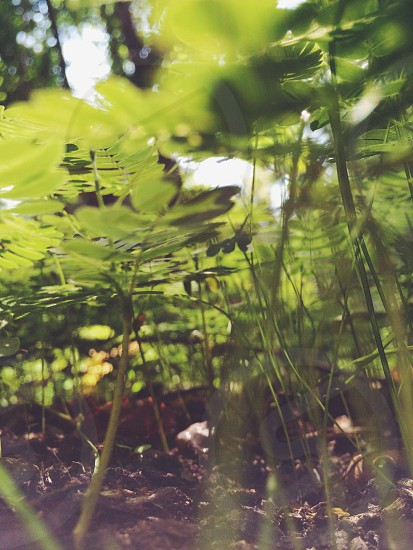 Macro forest floor nature green photo