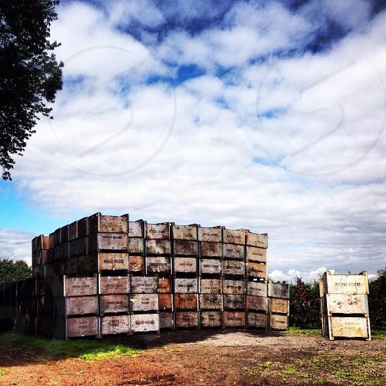 Apple crates  photo