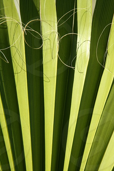 Palm leaf detail with curling fiber texture background photo