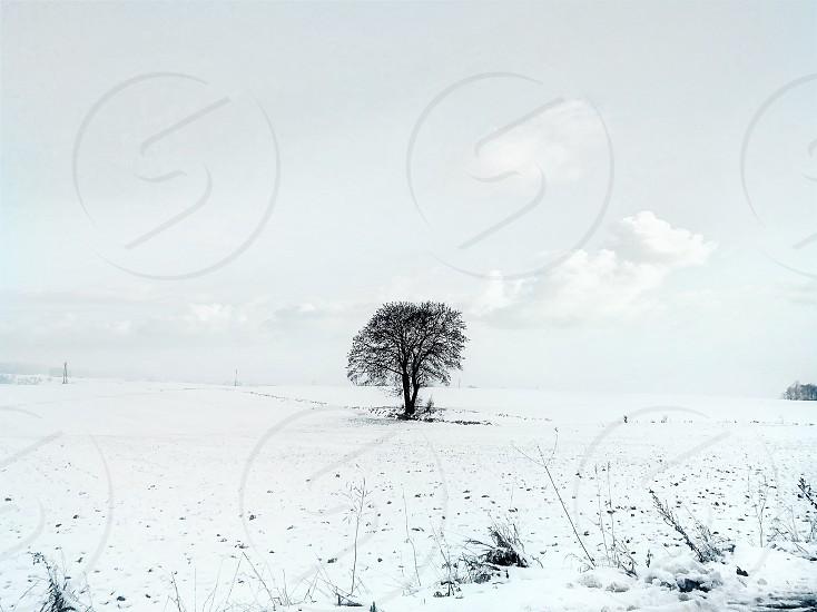 tree nature poland snow white photo
