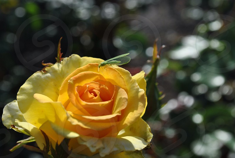 focus photography of yellow petaled flower photo