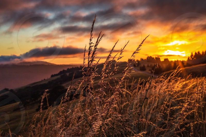 Color image of a golden sunset in the rural hills of northern California. photo