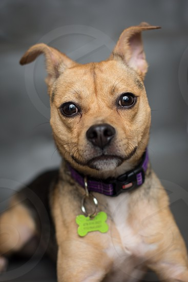 Puppy dog playful alert photo
