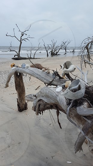 beach shells island photo