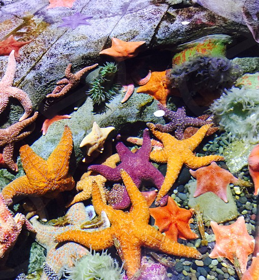 Aquarium touch tank starfish aquatic life nature ocean creatures colorful photo
