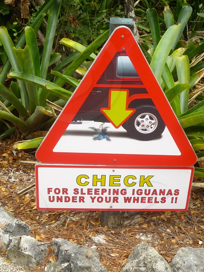 check for sleeping iguanas under your wheel sign photo