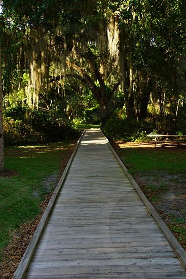 natural wooden path way photo