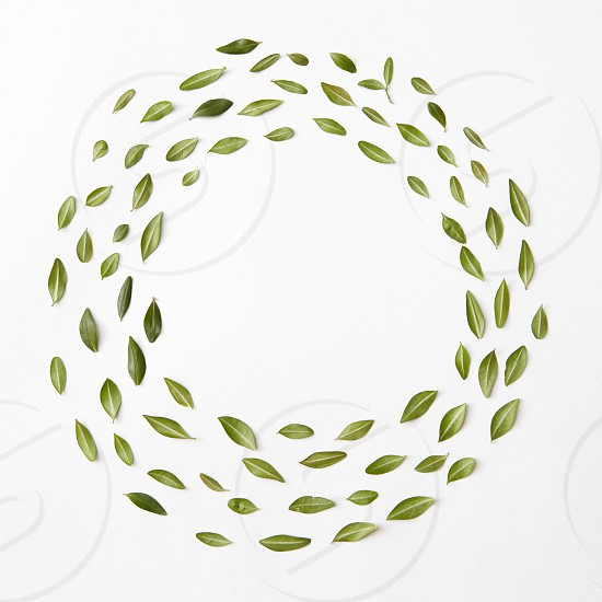 round frame of leaves on a white background Flat lay photo