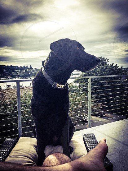 Black lab Labrador dog pup puppy pooch sunset Seattle lake union deck balcony  photo