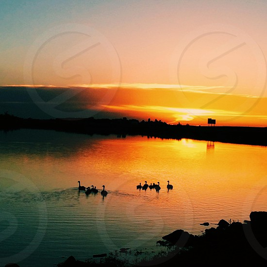 duck on water with sunset view photo