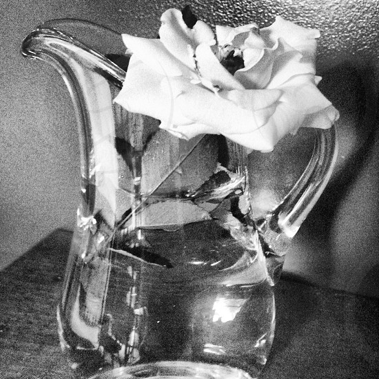 white flower on clear glass pitcher photo