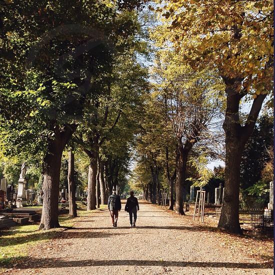 2 people walking between trees photo