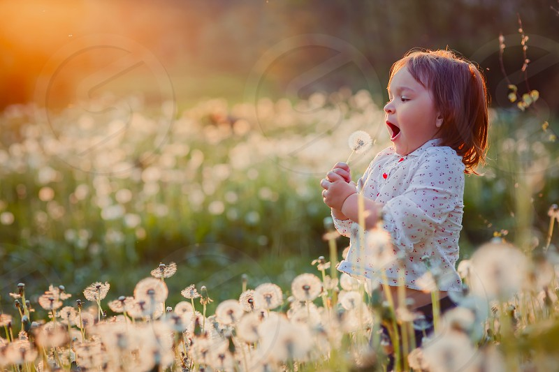 Little girl child nature field day summer park outdoor evening sunset sundown sunrise sun dandelion blowing white fun cute flowers meadow evening morning landscapes person baby people  hand happiness  photo