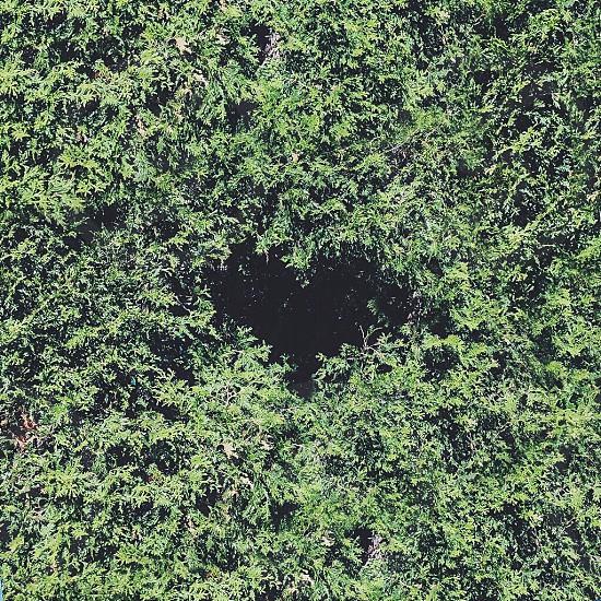 Green bush heart  photo