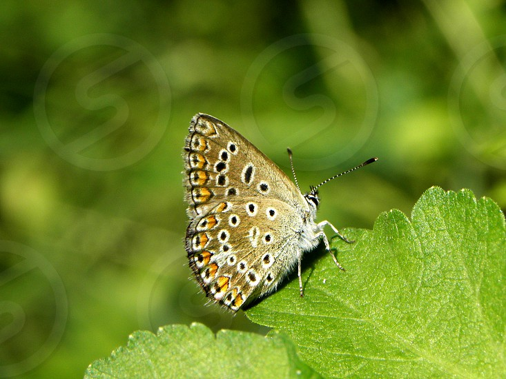 Beautiful little butterfly sitting on green leave. photo