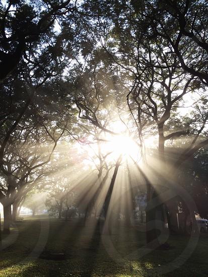 sun rays on green trees photo