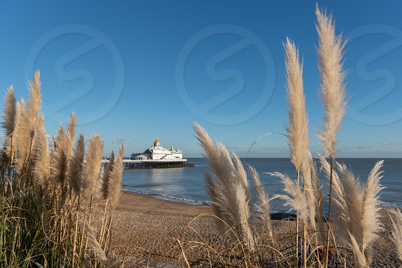 EASTBOURNE EAST SUSSEX/UK - JANUARY 28 : Pampas Grasses in front of Eastbourne Pier in East Sussex on January 28 2019 photo