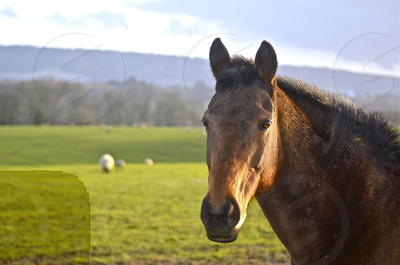 photo of brown horse near green grass field during daytime photo