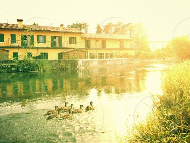 two storey building across river with ducks swimming  photo