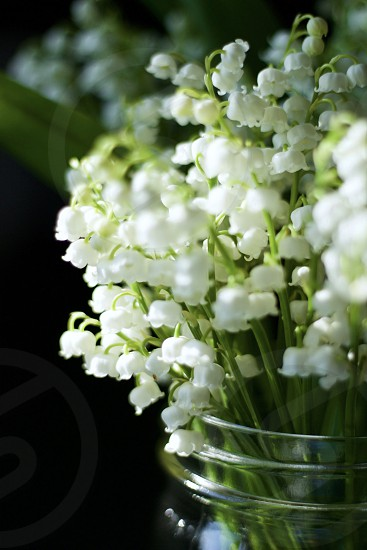 Closeup isolated view of lily of the valley blossoms in a mason jar in sunlight photo