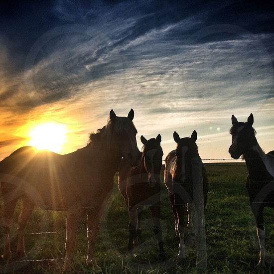Horse sunset sunshine rural Alberta buddies farmlife  photo