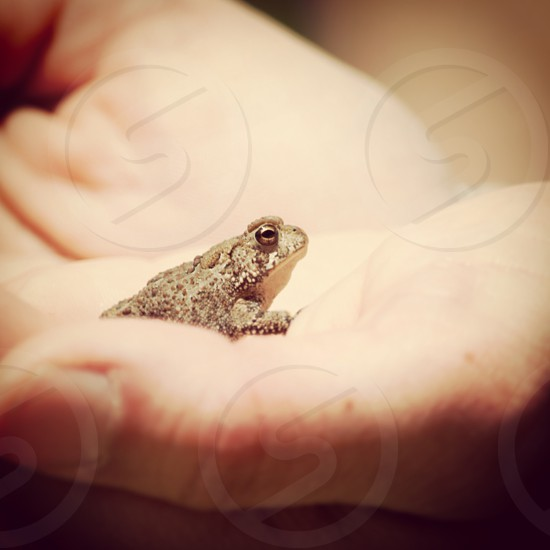 brown frog on hand photo
