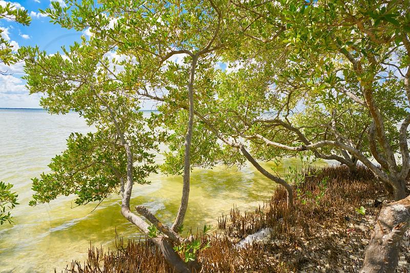 Holbox Island beach mangroove in Quintana Roo of Mexico photo