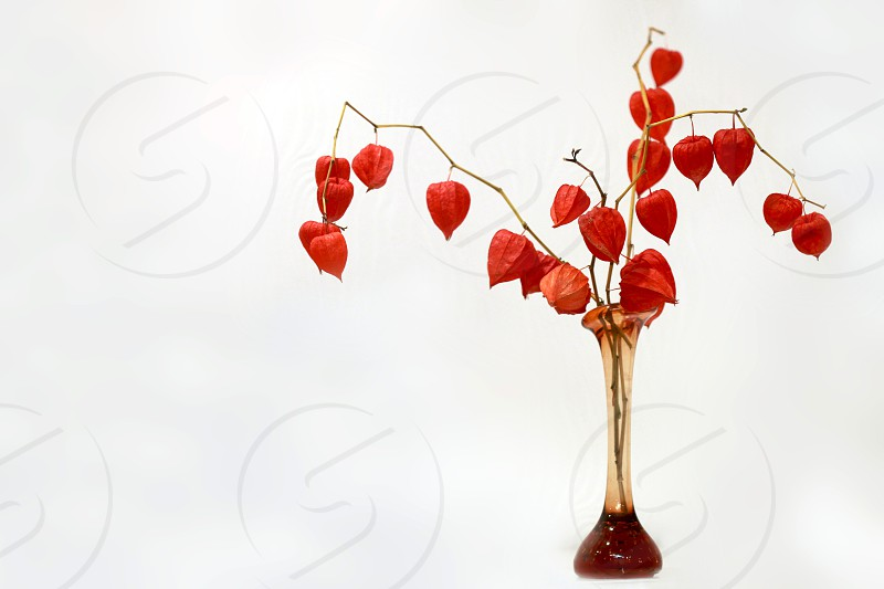 red flowers in vase photo