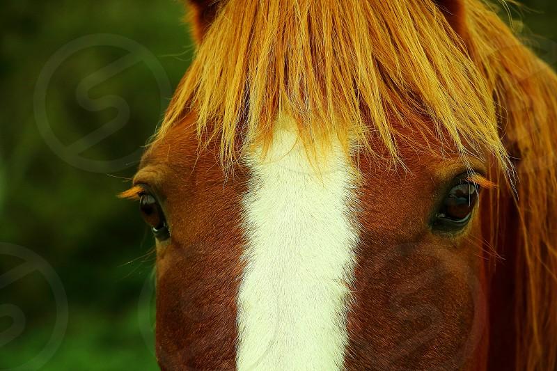 horse farm look  eyes fur animal mane head  photo