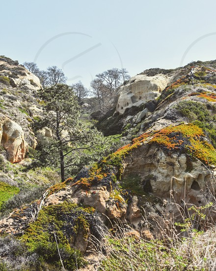 Torrey Pines California cliffs covered in vegetation  photo