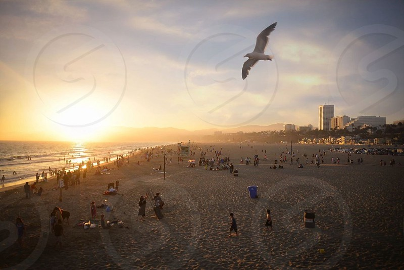 Beautiful sunset view from the Santa Monica Pier.   Santa Monica CA photo