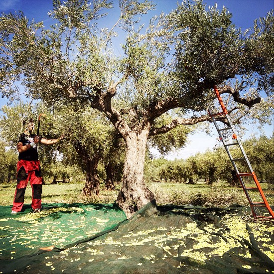 man wearing black and red pants standing near green trees with orange and gray portable step ladder photo