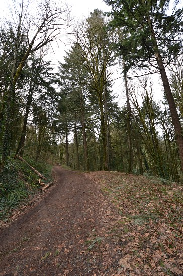 Portland's Forest Park Portland Oregon trailhead America's premiere urban forest trails one of largest urban forest in US 5154 acres photo